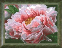 Peony - Counted Cross Stitch Kit with Color Symbolic Scheme
